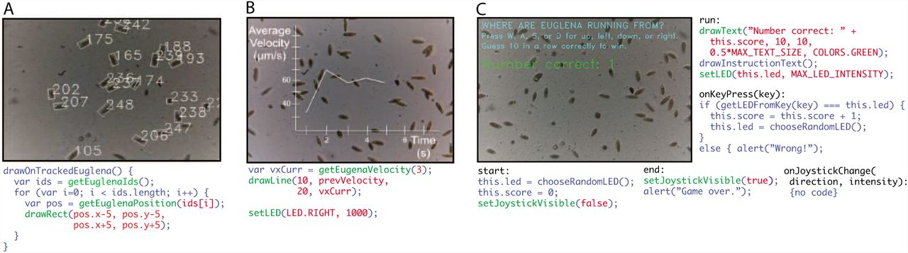 An interactive programming paradigm for realtime experimentation