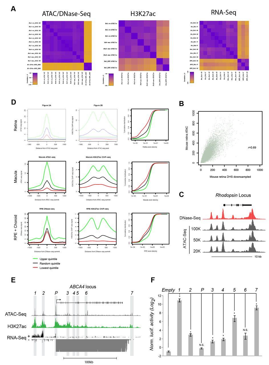 Epigenomic Profiling and Single-Nucleus-RNA-Seq Reveal Cis