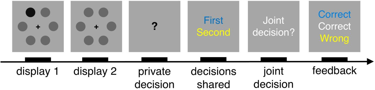 Group decision-making is optimal in adolescence | bioRxiv