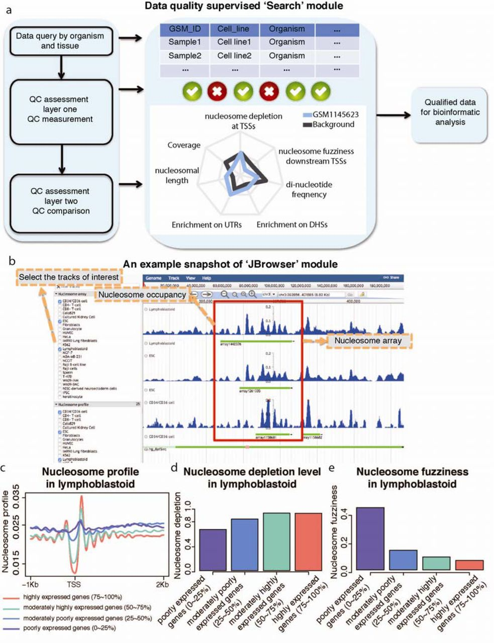 NUCOME: A Comprehensive Database of Nucleosome Organizations in