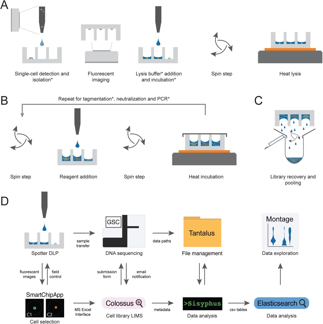 Resource: Scalable whole genome sequencing of 40,000 single cells
