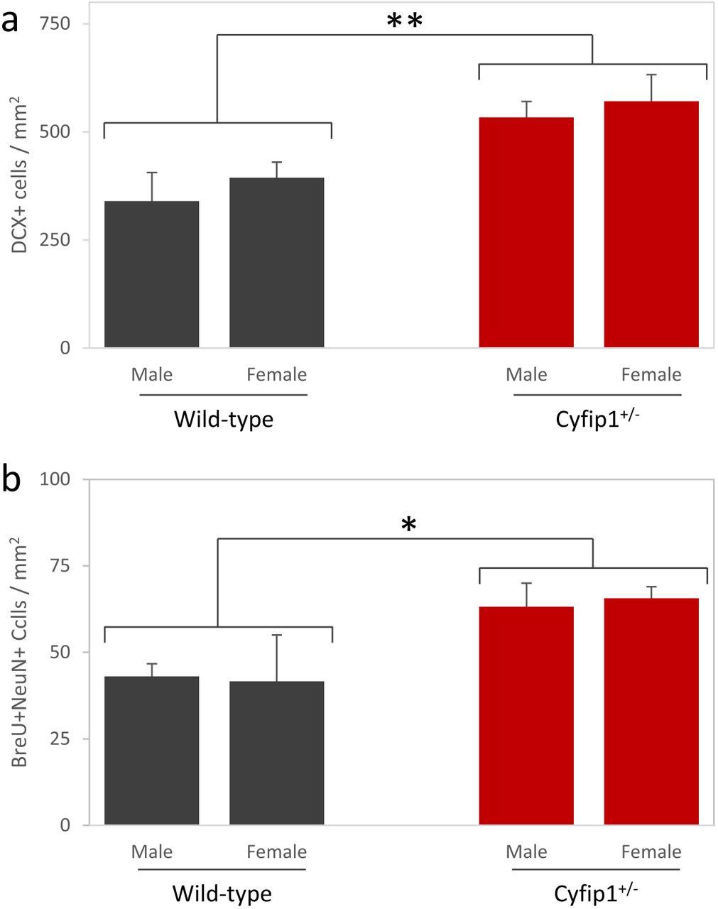 Haploinsufficiency of the schizophrenia risk gene Cyfip1