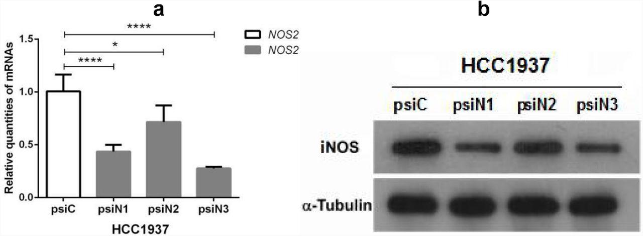 Short-hairpin RNA-guided single gene knockdown reverses
