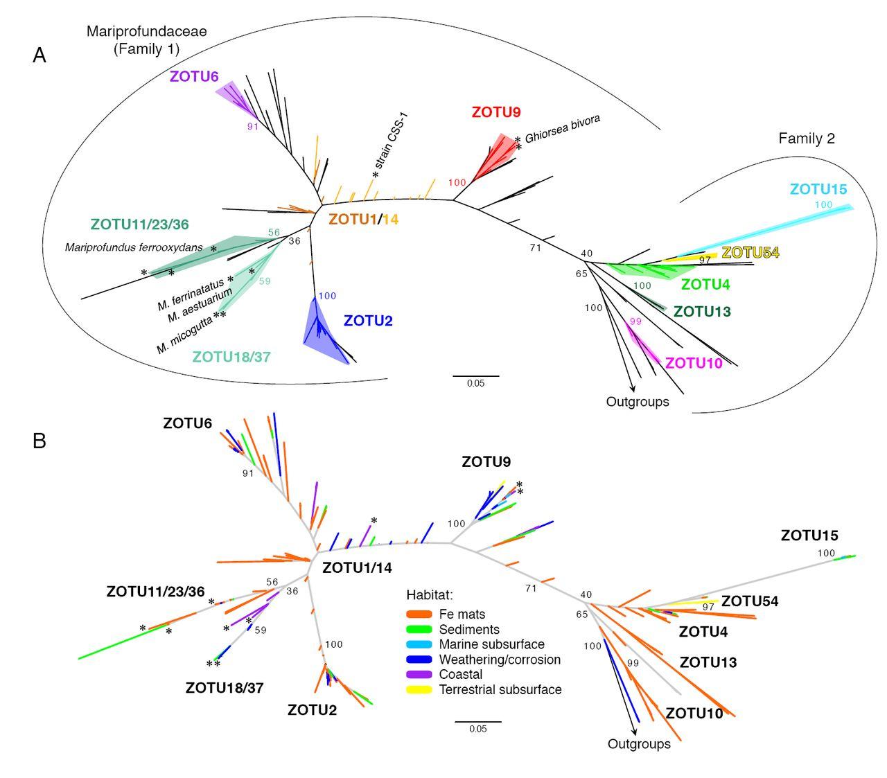 Marine Fe-oxidizing Zetaproteobacteria: Historical, ecological, and