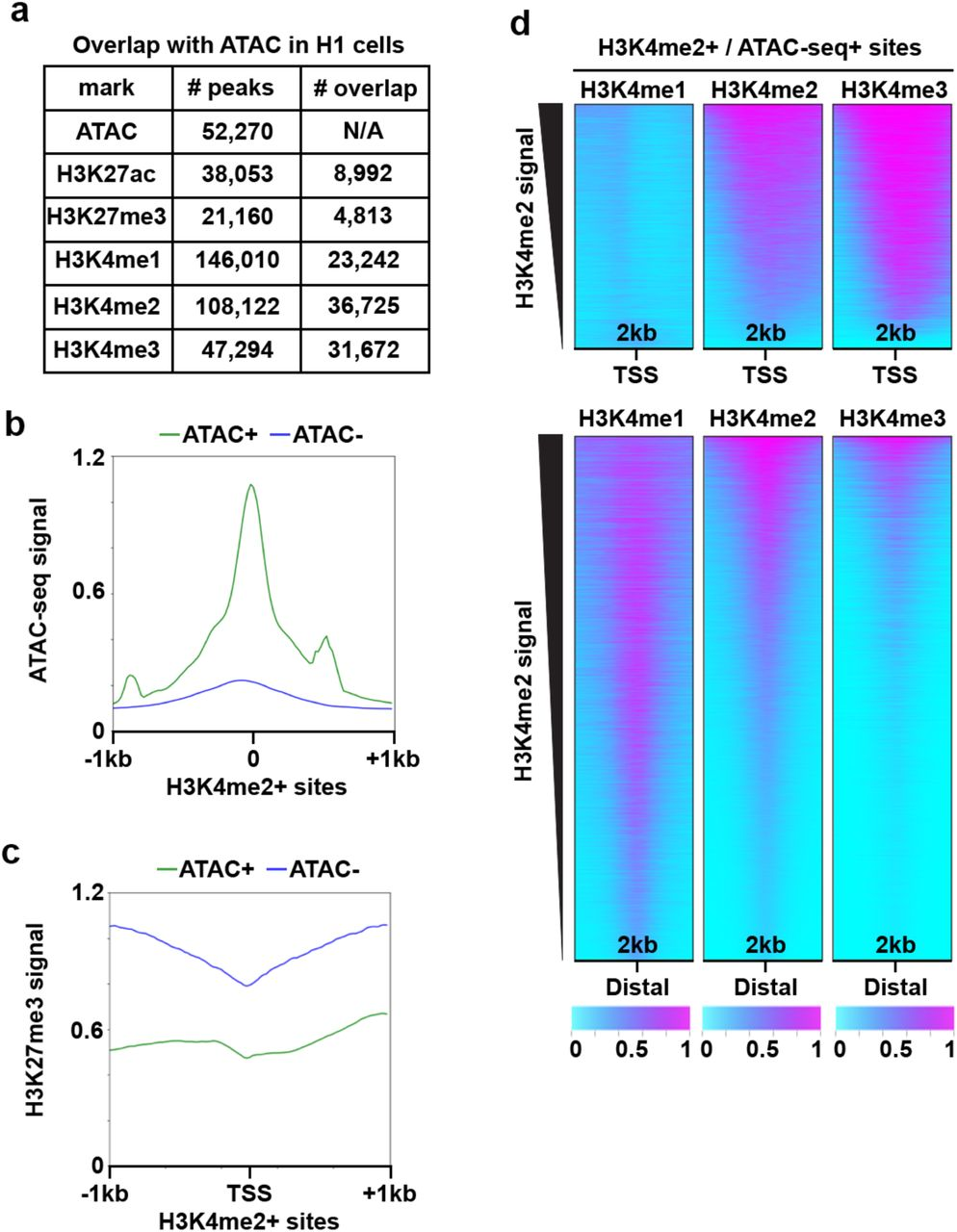 Automated in situ profiling of chromatin modifications