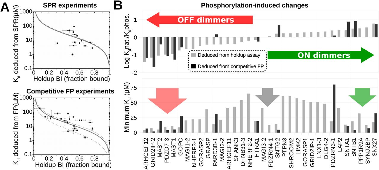 Rewiring Of RSK PDZ Interactions By Linear Motif