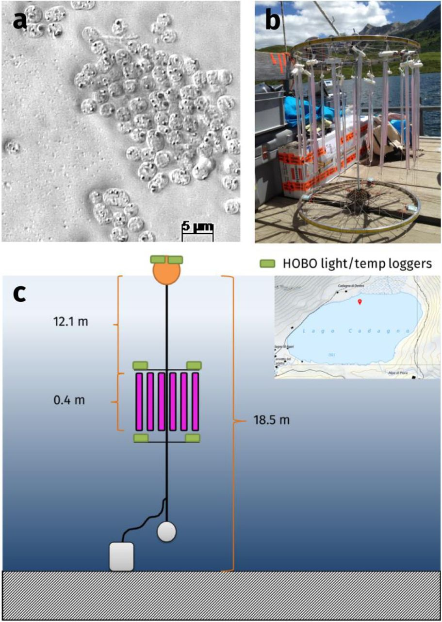 Anoxygenic Photosynthesis and Dark Carbon Metabolism under micro