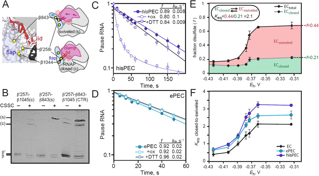 The elemental mechanism of transcriptional pausing | bioRxiv