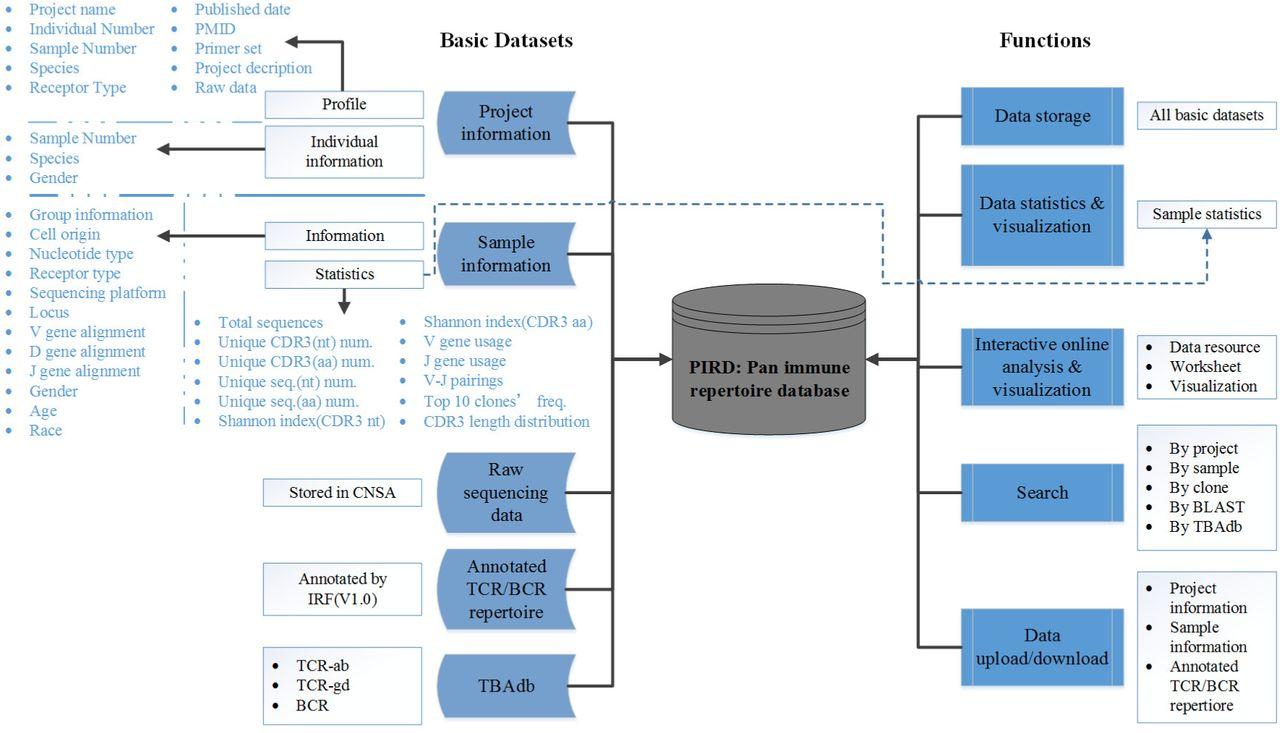 PIRD: Pan immune repertoire database | bioRxiv