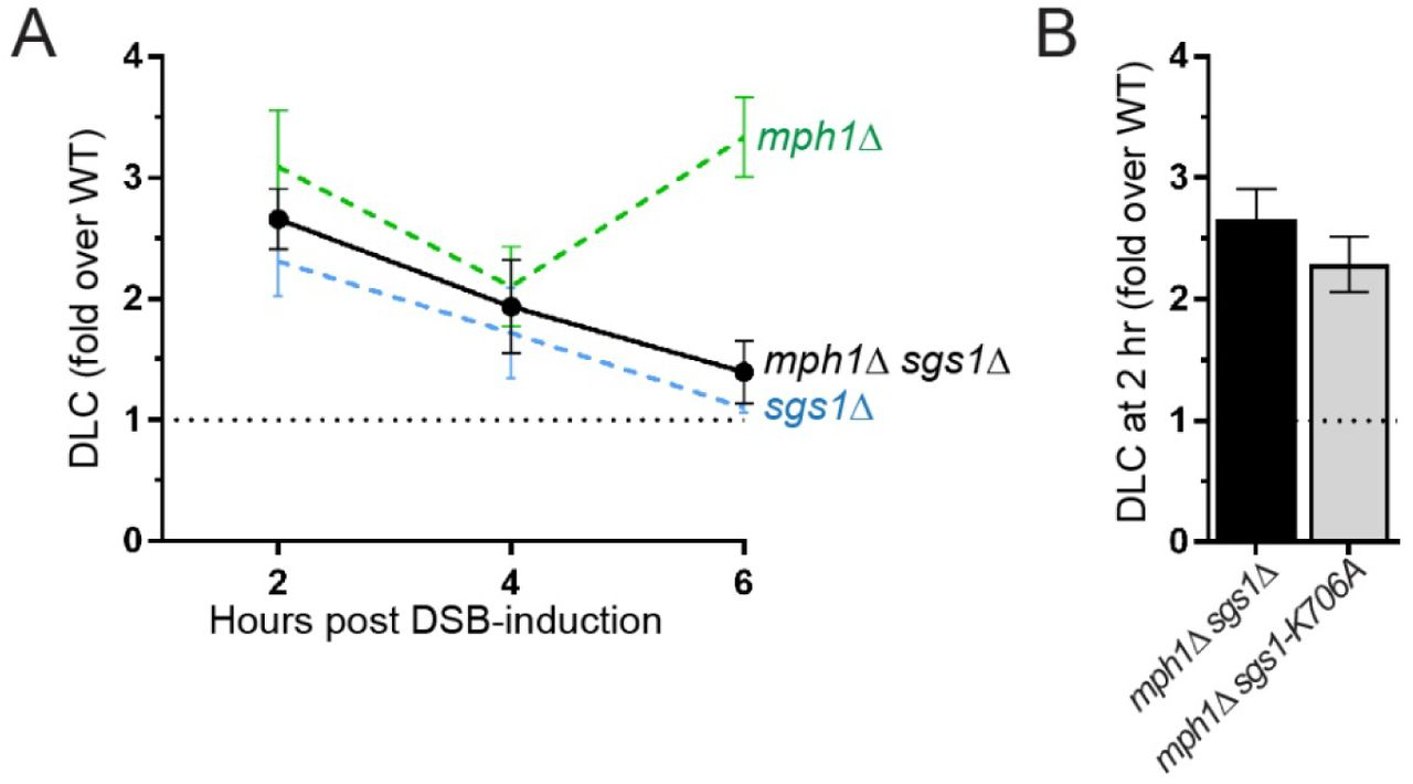 Dynamic Processing of Displacement Loops During Recombinational DNA