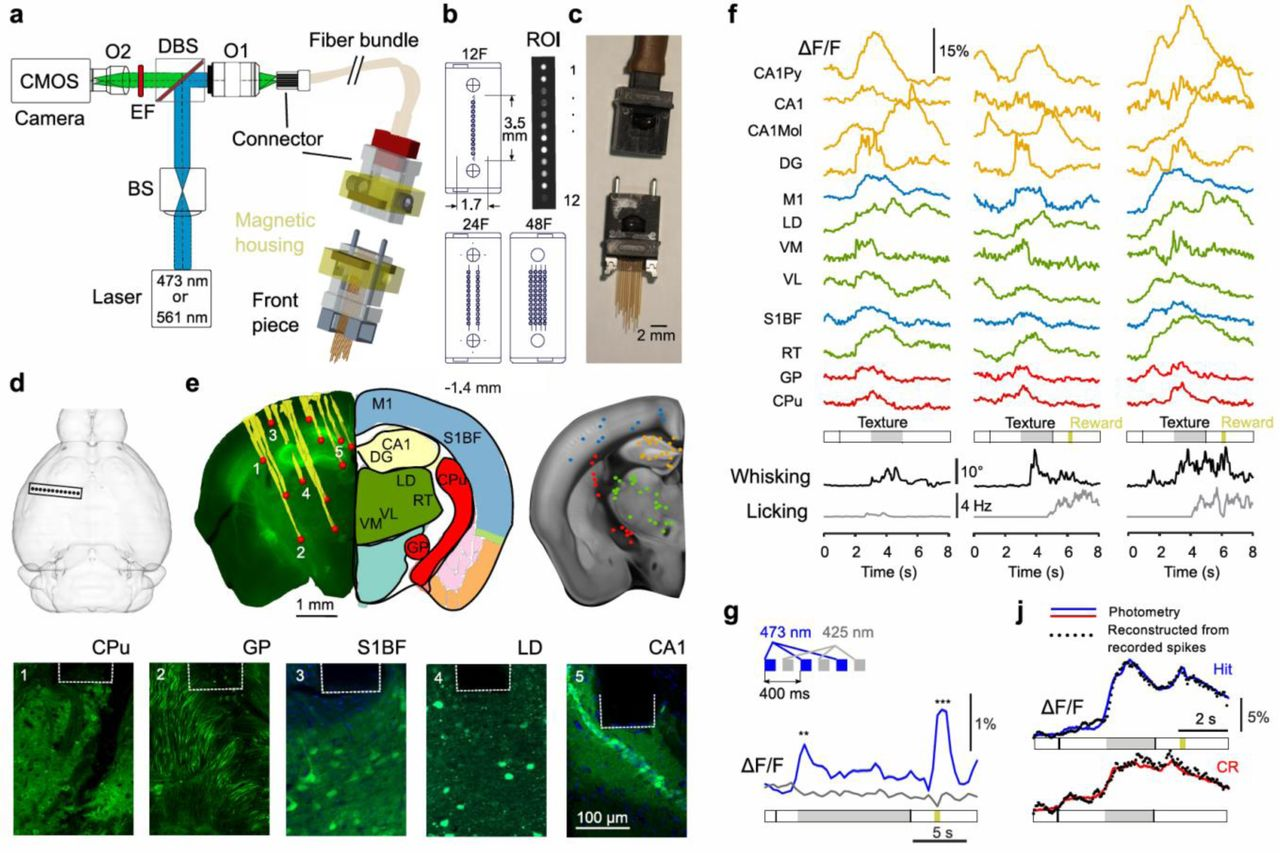 High-density multi-fiber photometry for studying large-scale