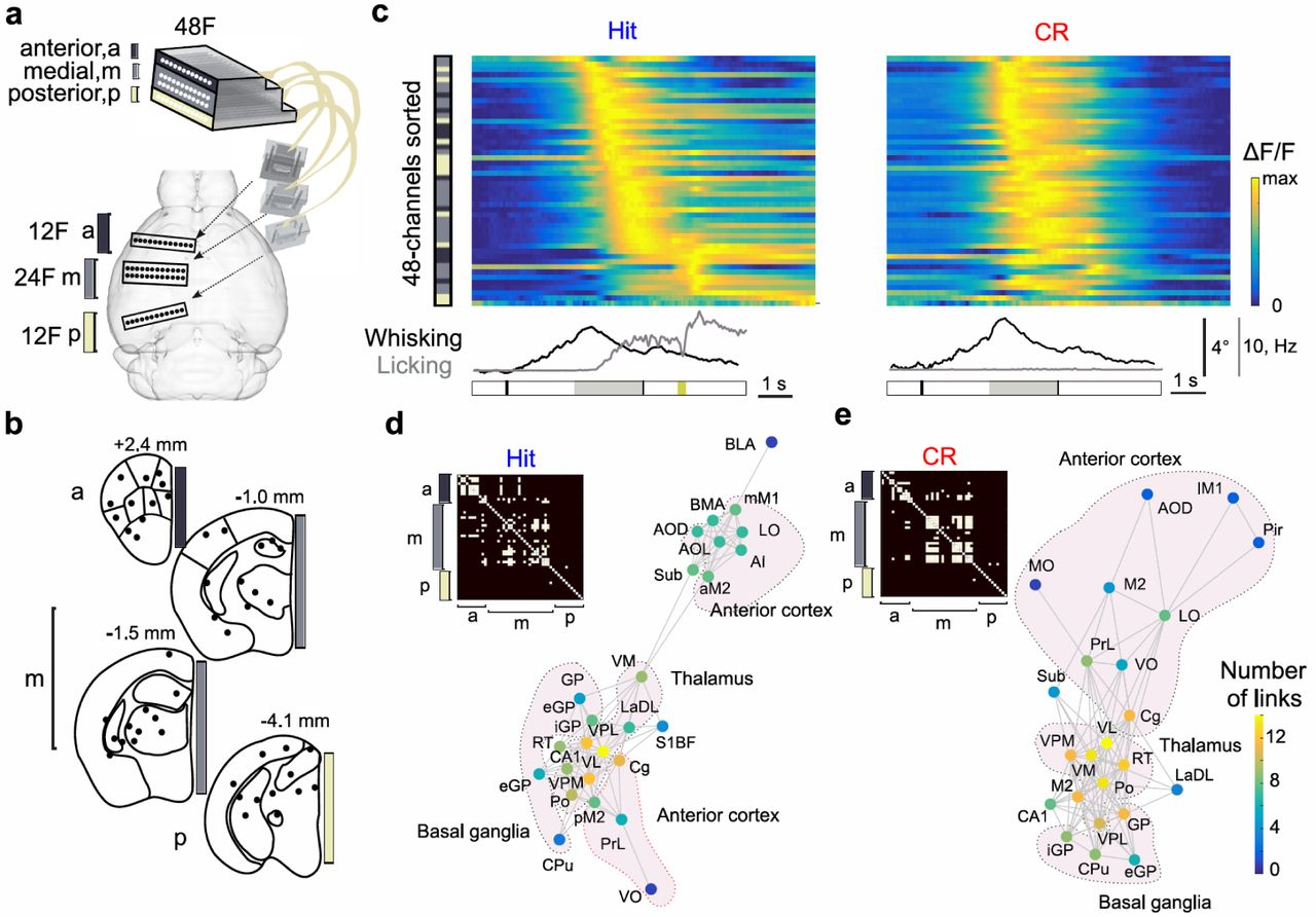 High-density multi-fiber photometry for studying large-scale brain