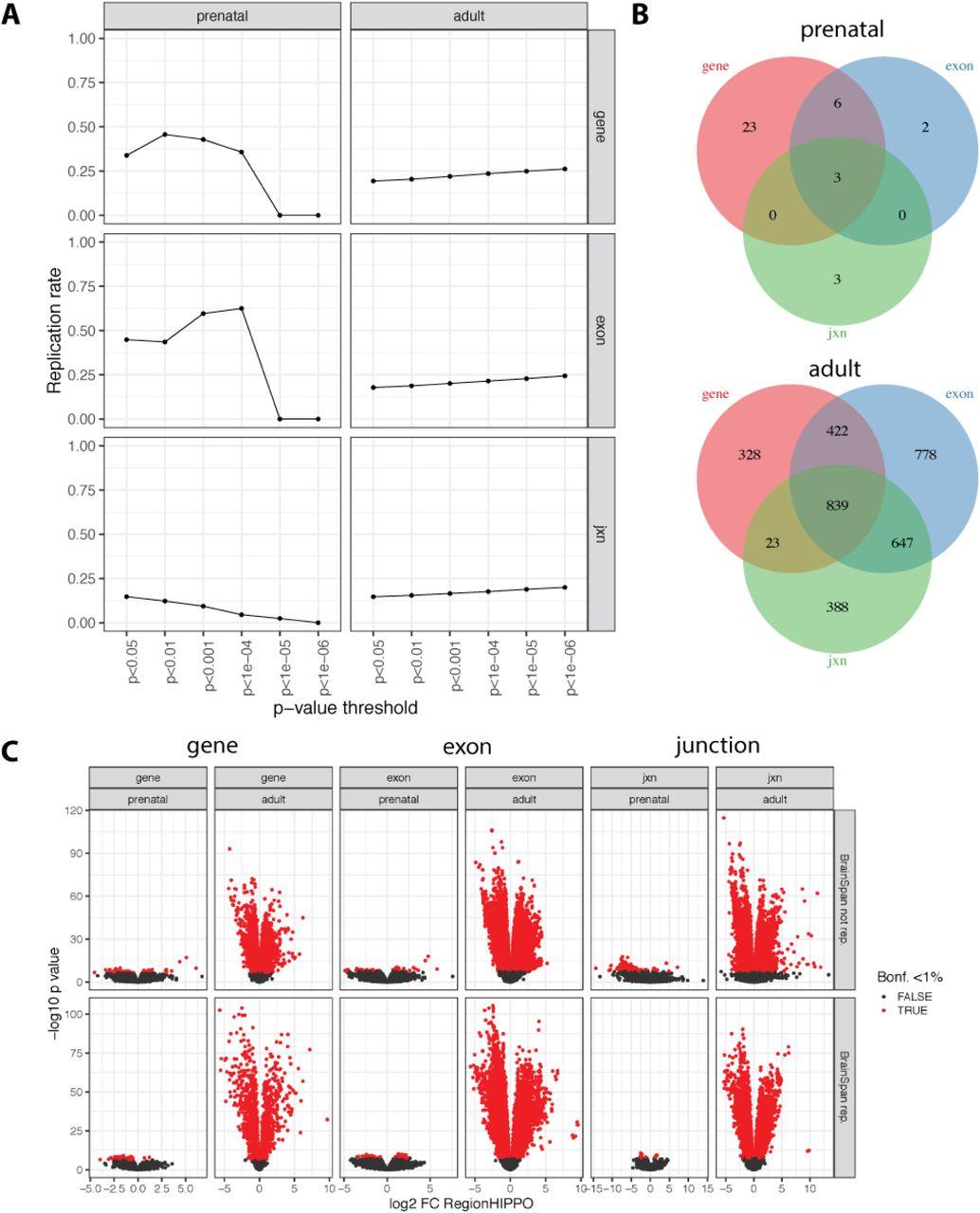 Regional heterogeneity in gene expression, regulation and