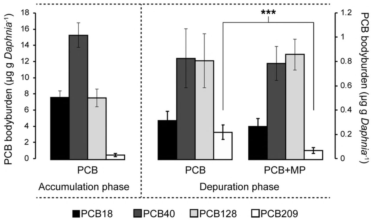Microplastic-mediated transport of PCBs? A depuration study
