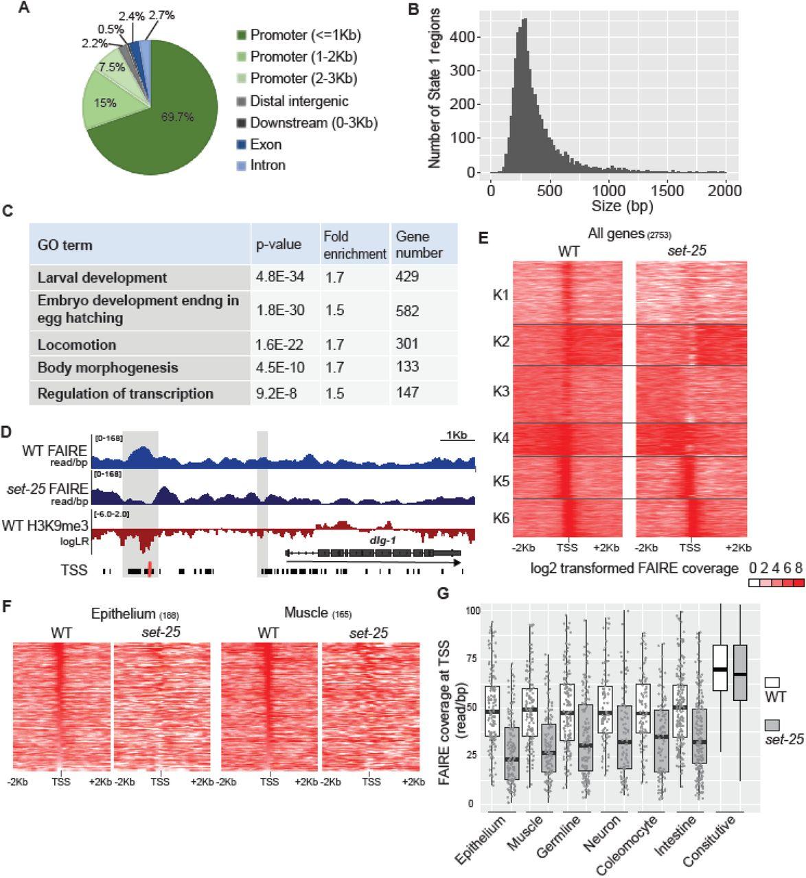 A heterochromatic histone methyltransferase lowers nucleosome