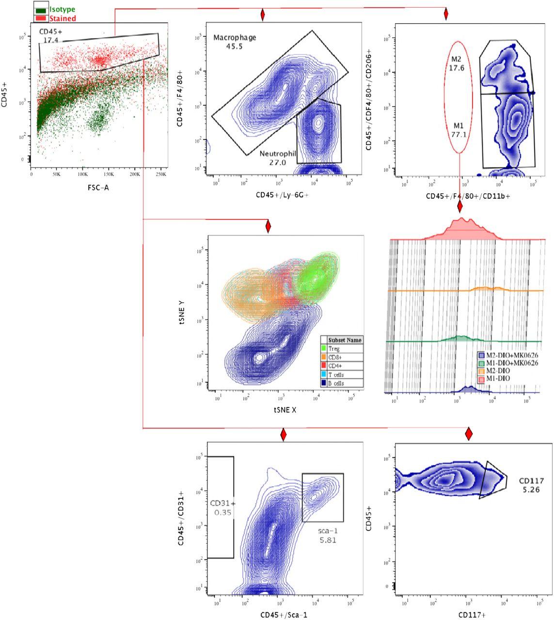 Dipeptidyl dipeptidase-4 inhibitor, MK-0626, promotes bone marrow