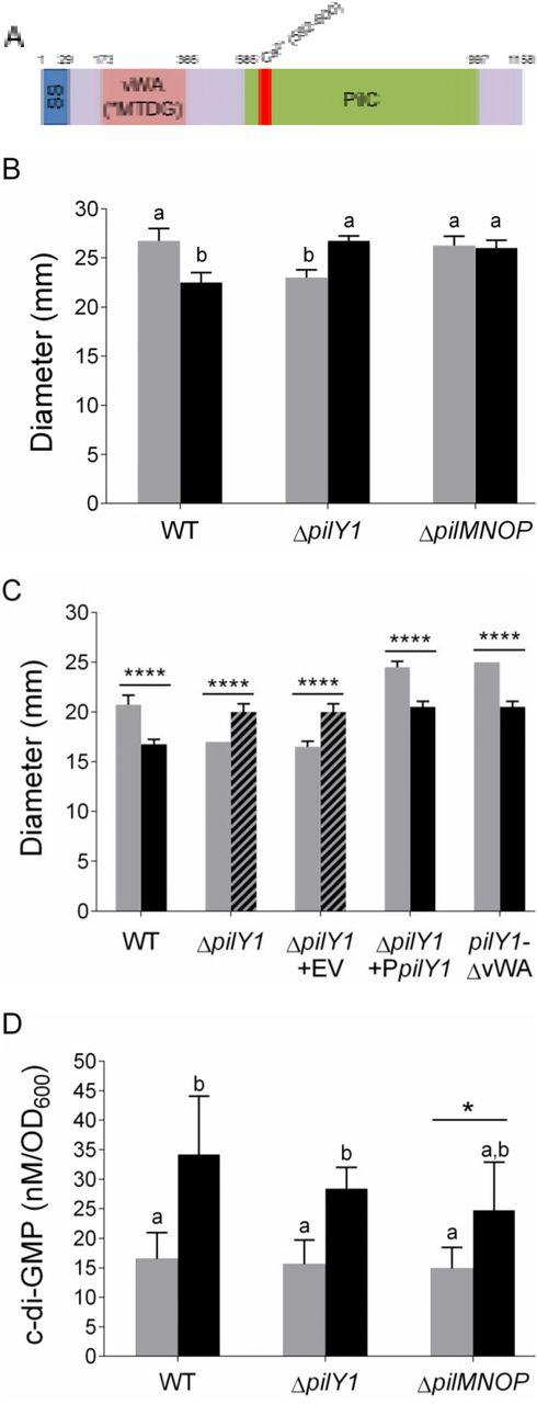 Ethanol decreases Pseudomonas aeruginosa flagellar motility