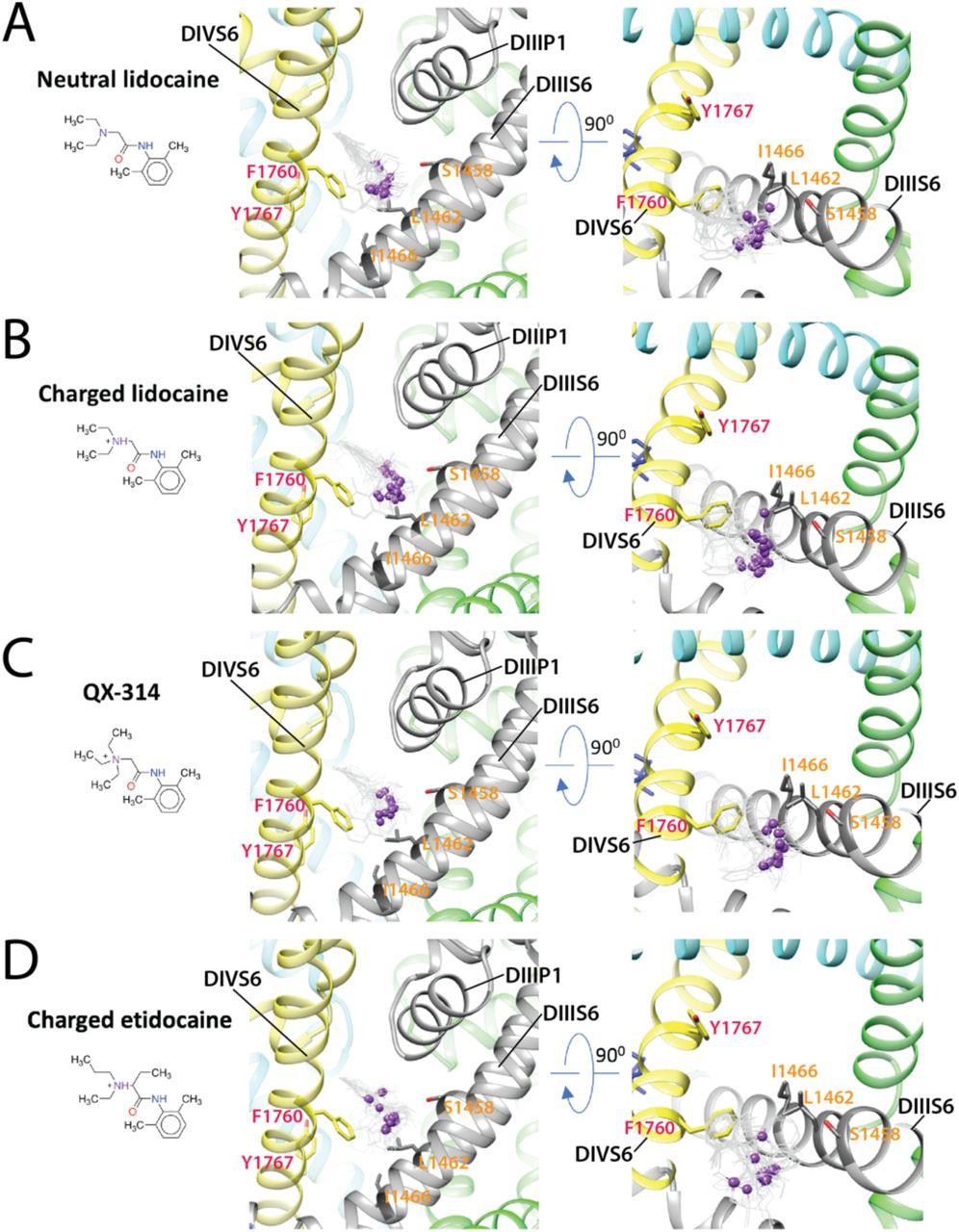 Structural Basis for Antiarrhythmic Drug Interactions with
