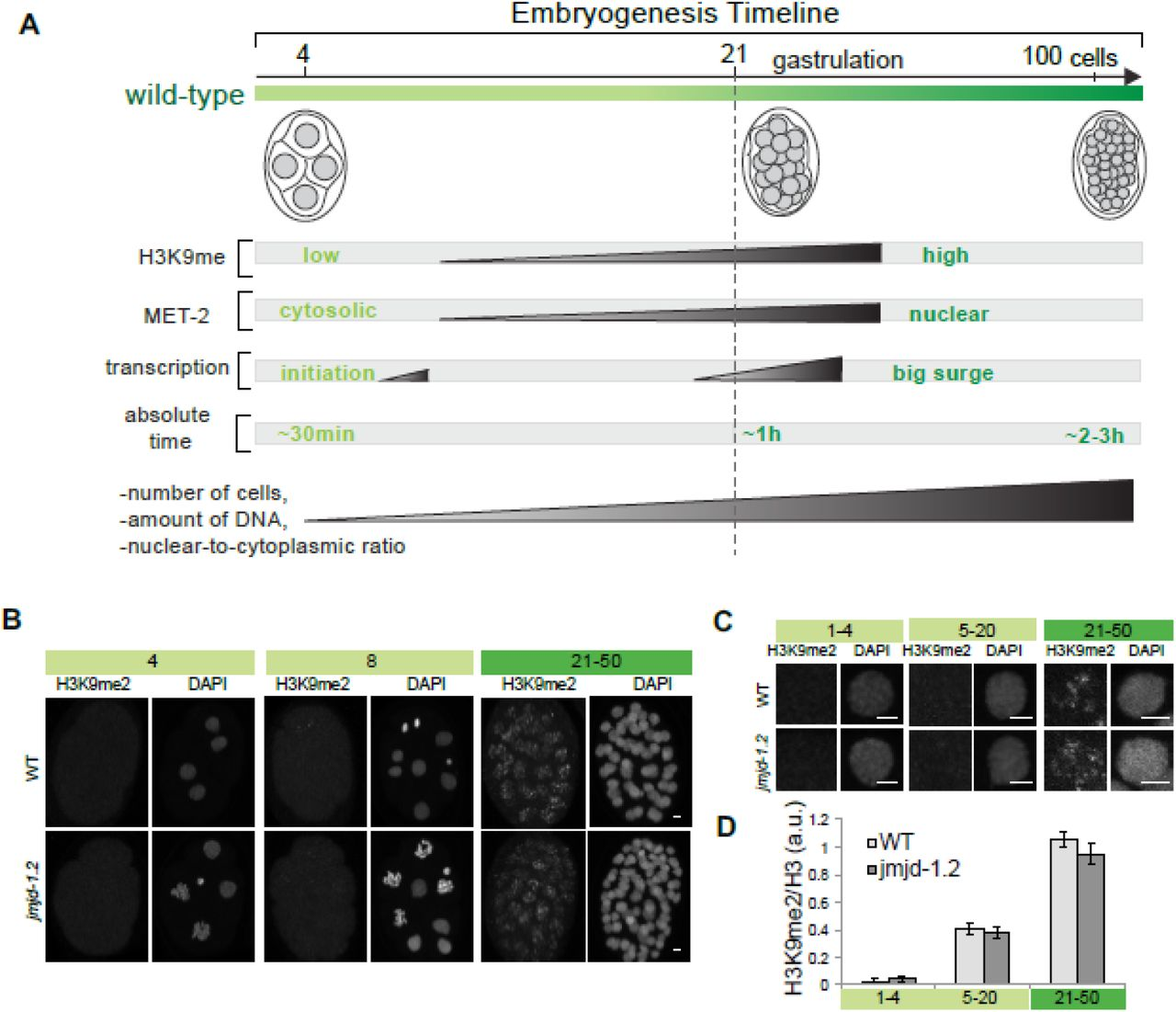 MET-2, a SETDB1 family methyltransferase, coordinates embryo events