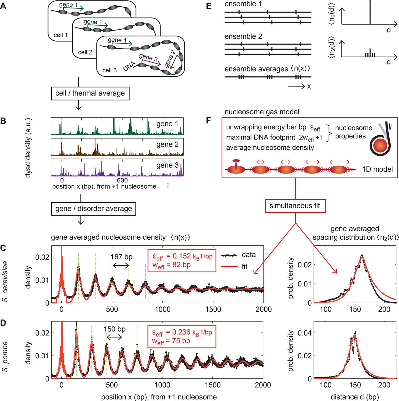 Emergence of robust nucleosome patterns from an interplay of