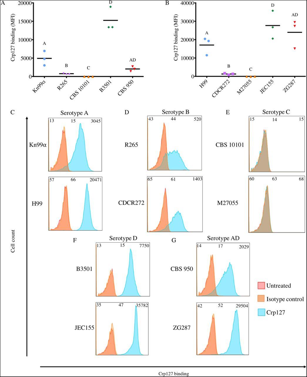 Redistribution of a glucuronoxylomannan epitope towards the