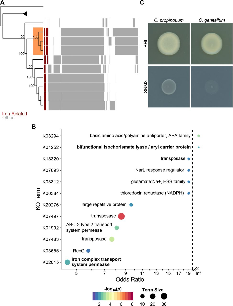 Bacterial competition mediated by siderophore production among the
