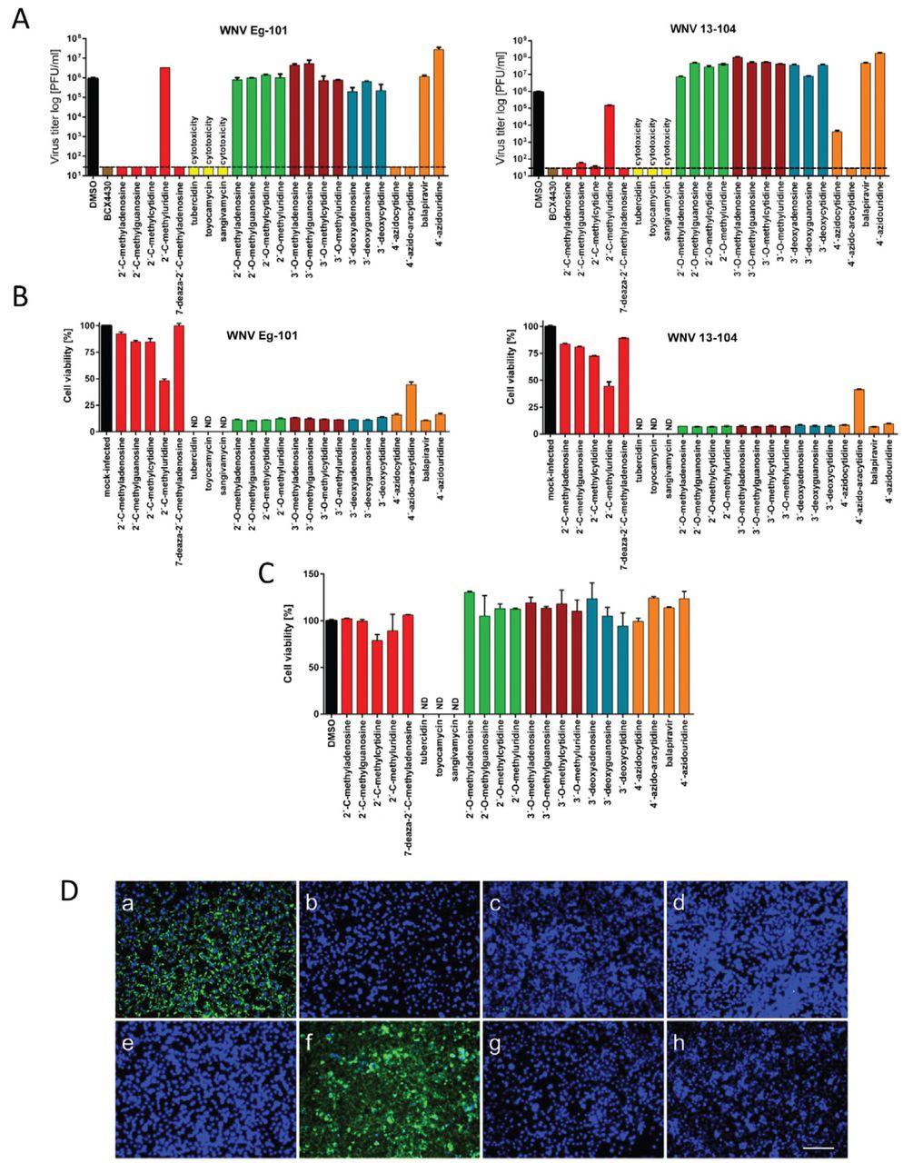 Viral RNA-dependent RNA polymerase inhibitor 7-deaza-2′-C