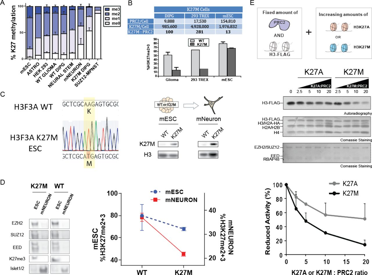 Multiple modes of PRC2 inhibition elicit global chromatin