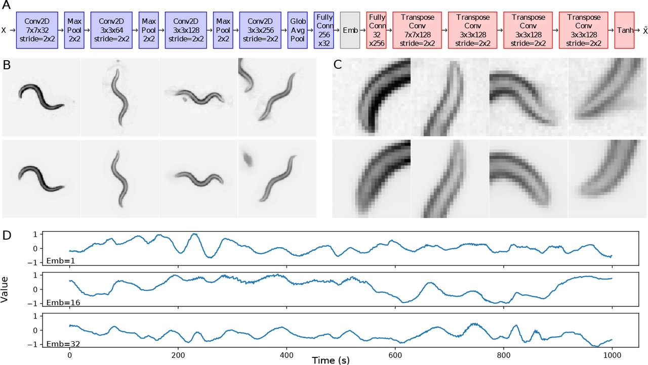 Identification of C  elegans strains using a fully