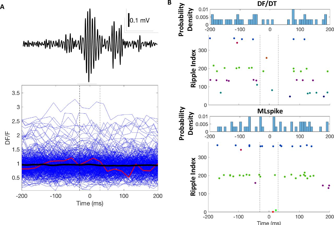 Synaptic properties and network state-dependent recruitment