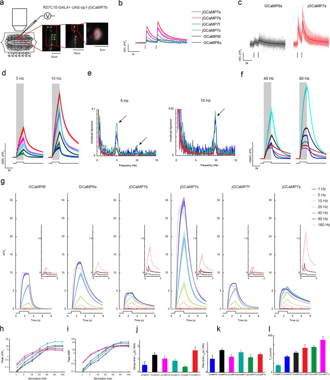High-performance GFP-based calcium indicators for imaging