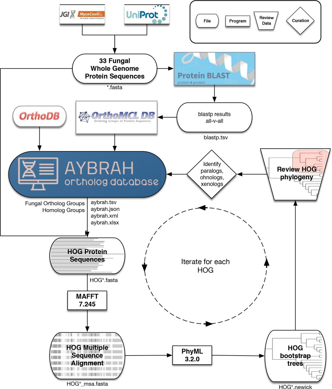 AYbRAH: a curated ortholog database for yeasts and fungi