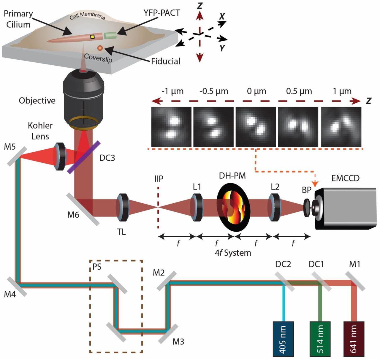 Revealing the nanoscale morphology of the primary cilium using super