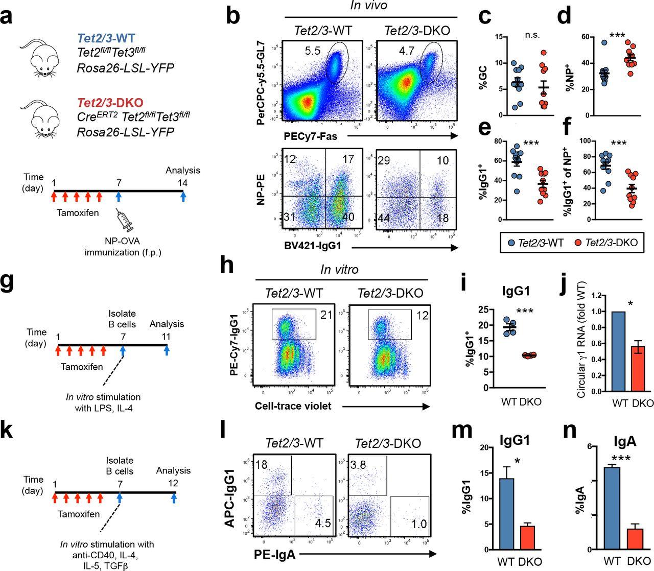 TET enzymes augment AID expression via 5hmC modifications at