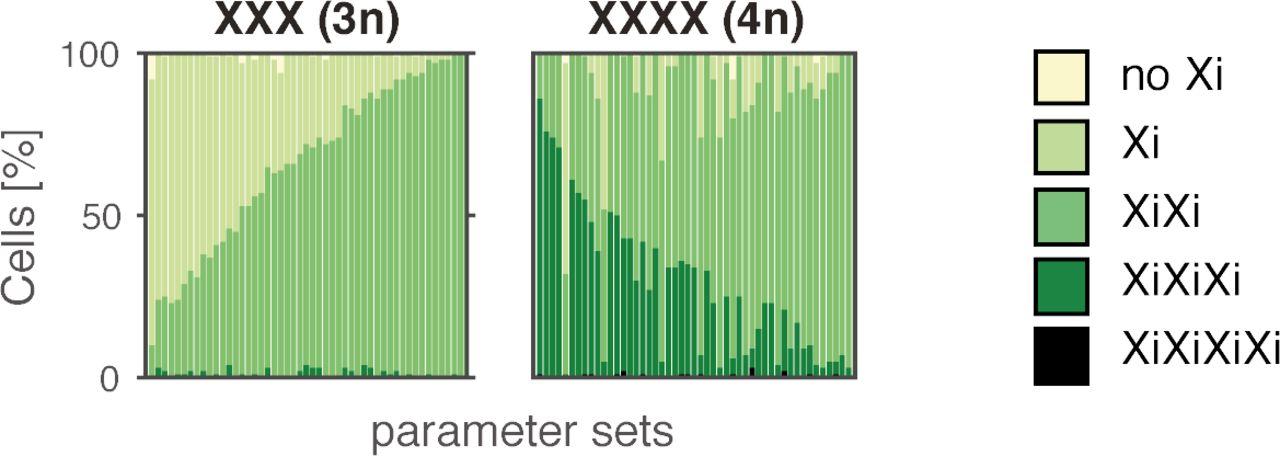 A symmetric toggle switch explains the onset of random X