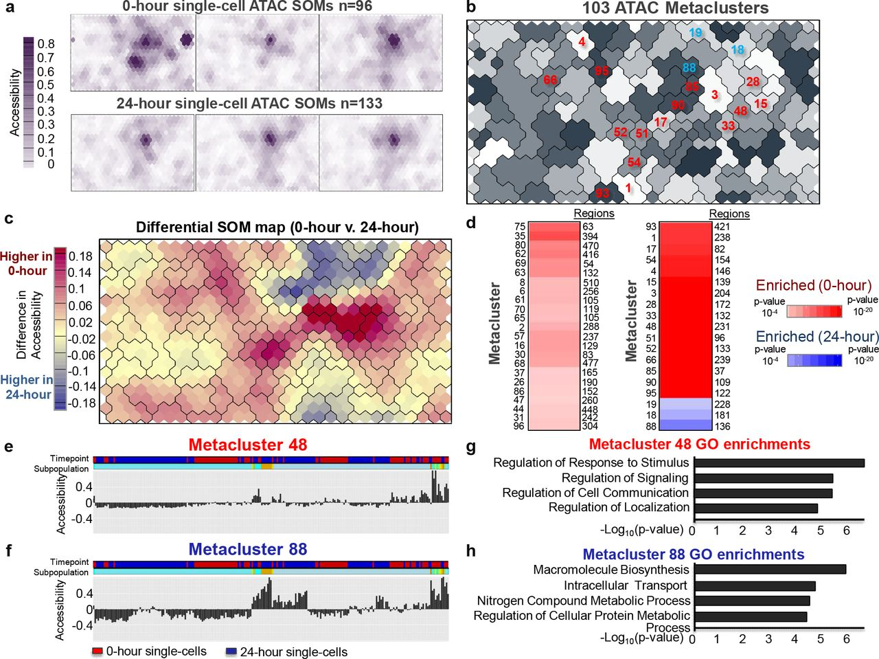 Building gene regulatory networks from scATAC-seq and scRNA-seq ...