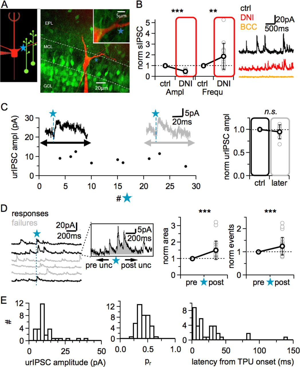Local reciprocal release of GABA from dendritic spines of olfactory