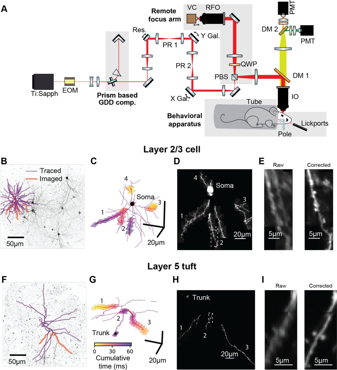 Functional clustering of dendritic activity during decision-making