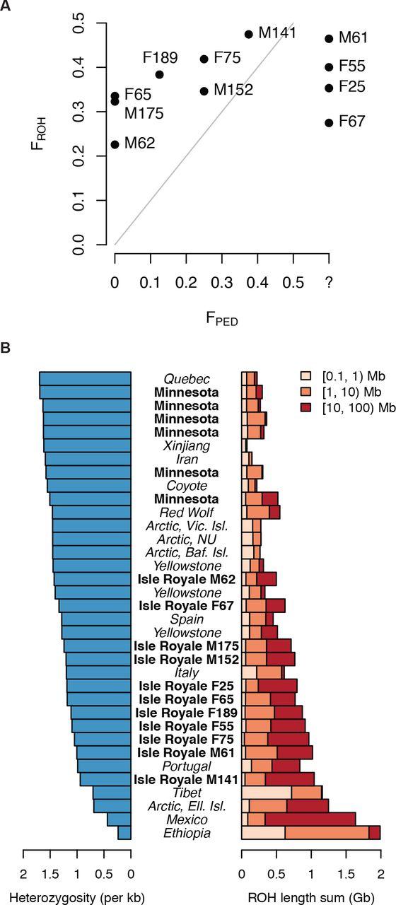 Genomic signatures of extensive inbreeding in Isle Royale