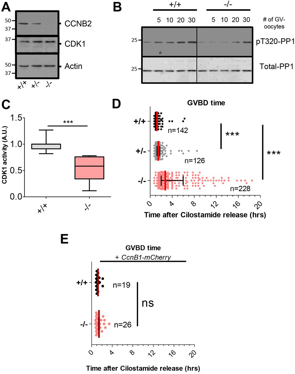 Cyclin B2 is required for progression through meiosis in mouse