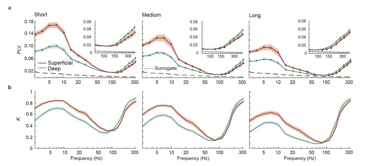 Long-range phase synchronization of high-gamma activity in human
