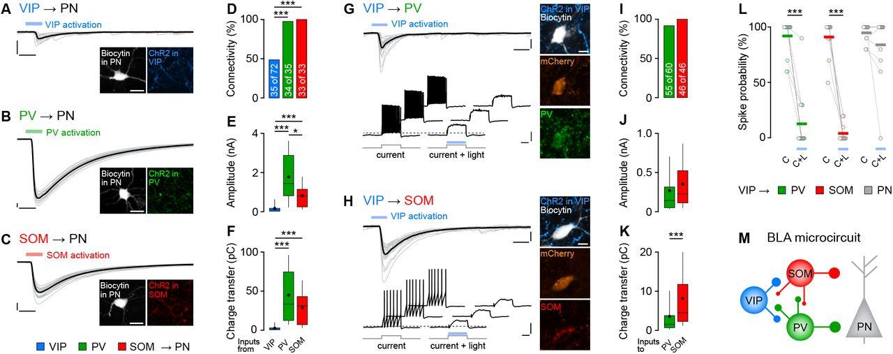 Adaptive disinhibitory gating by VIP interneurons permits