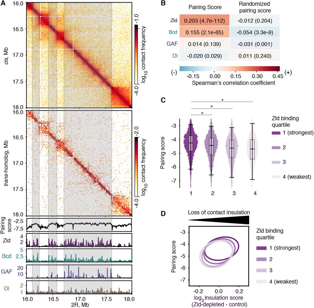 The genome-wide, multi-layered architecture of chromosome