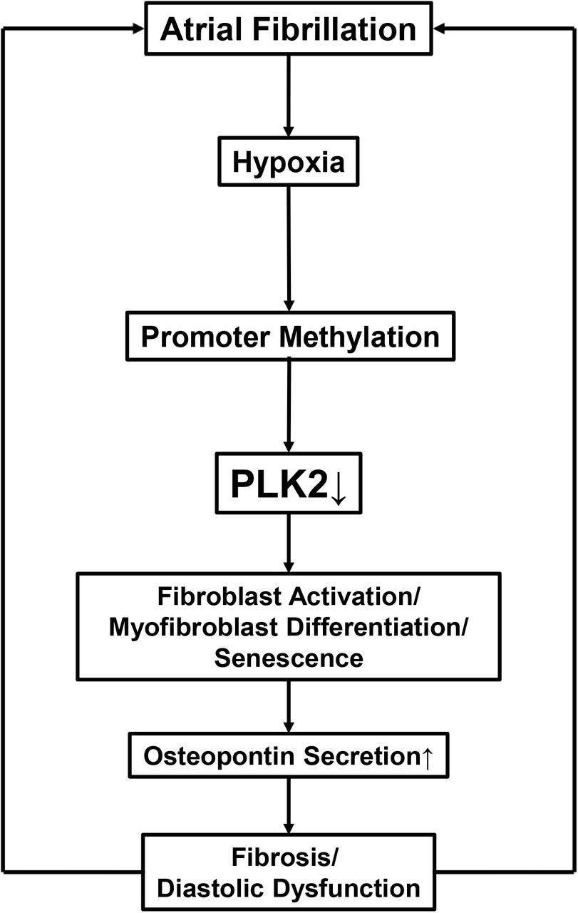 Hypoxia-induced epigenetic silencing of polo-like kinase 2