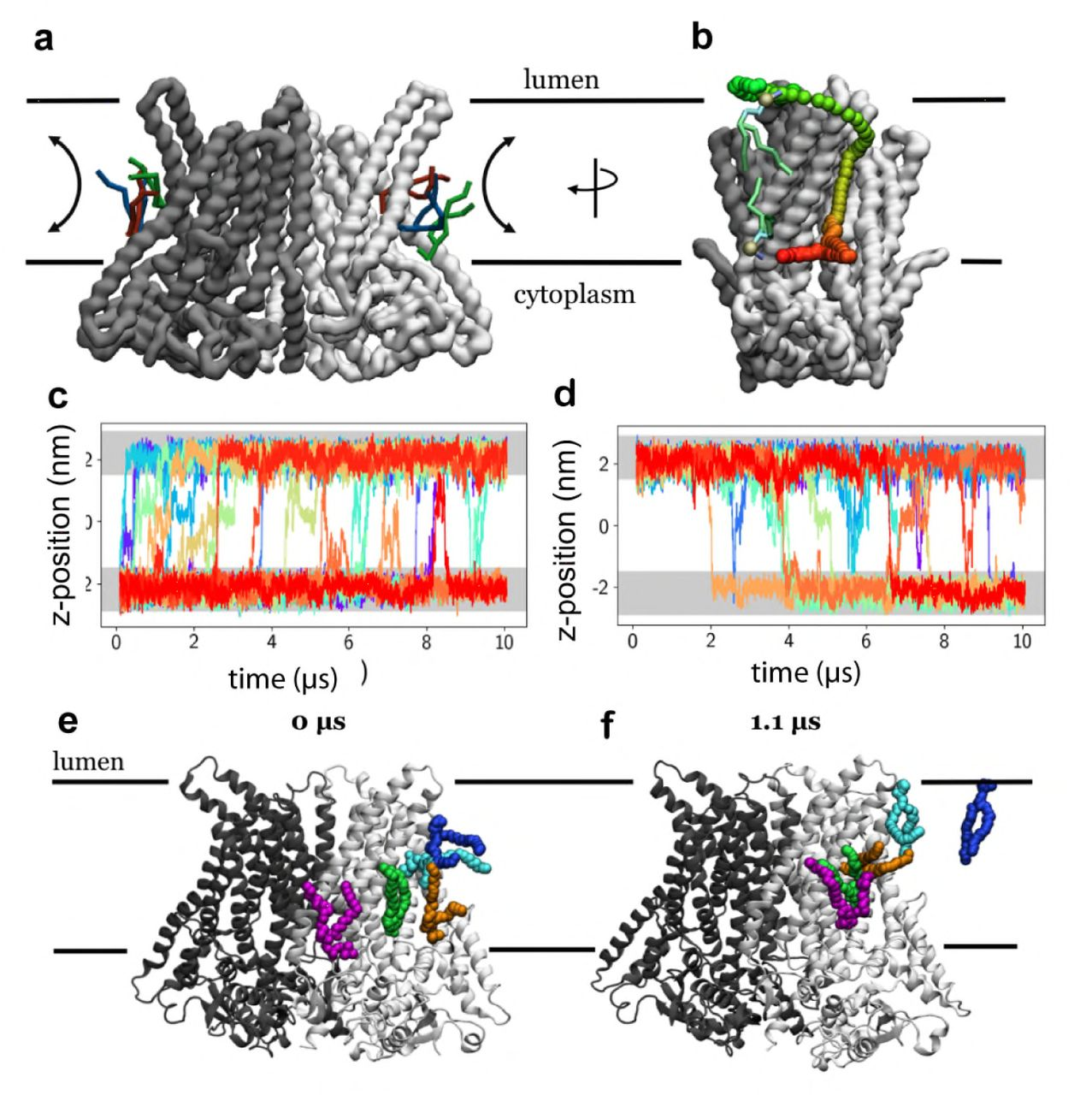 The structural basis of lipid scrambling and inactivation in
