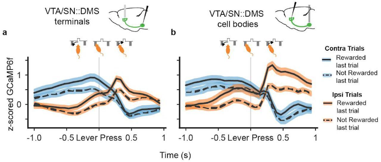 Value representations do not explain movement selectivity in DMS