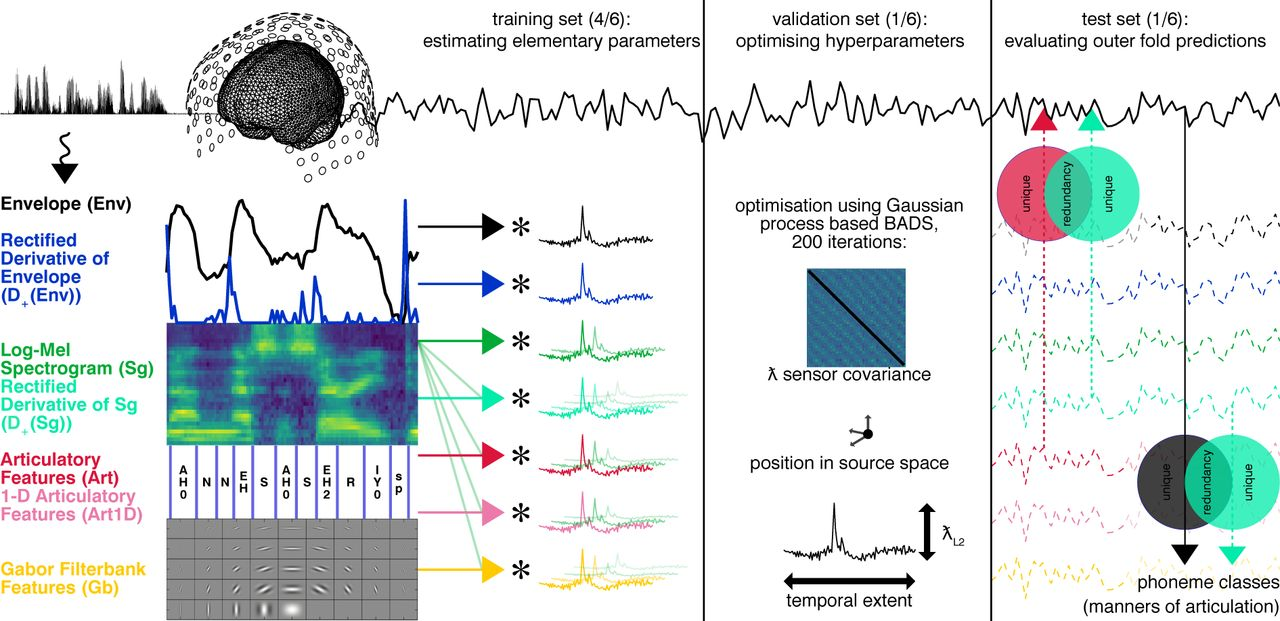 Phoneme-level processing in low-frequency cortical responses