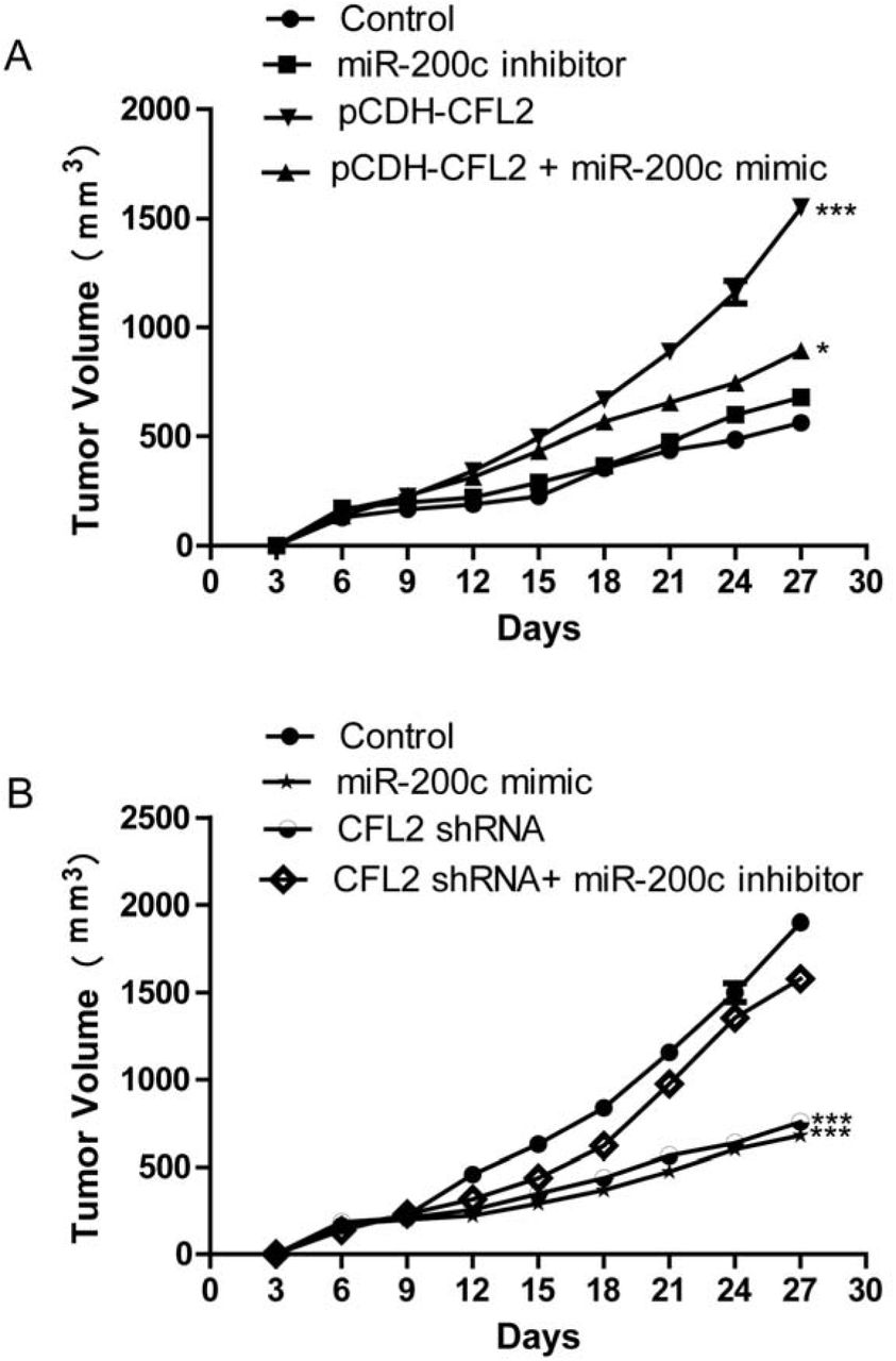 Microrna 200c Suppresses Epithelial Mesenchymal Transition Of Ovarian Cancer By Targeting Cofilin 2 Biorxiv