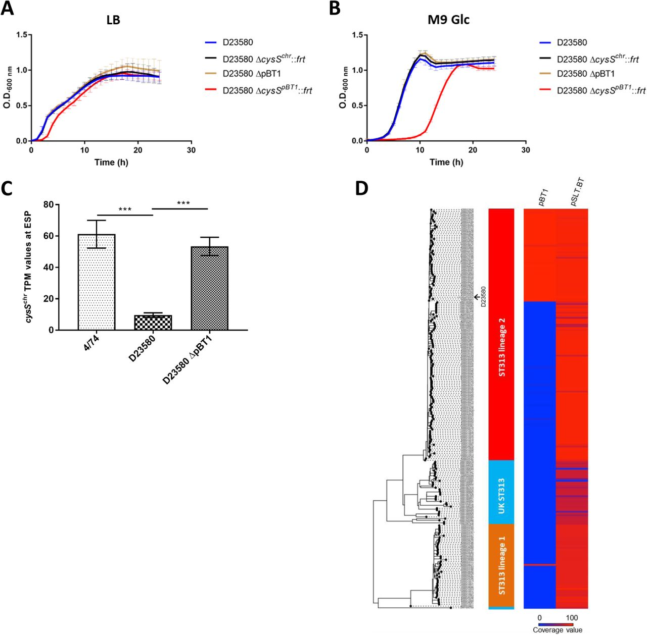 Adding function to the genome of African Salmonella ST313