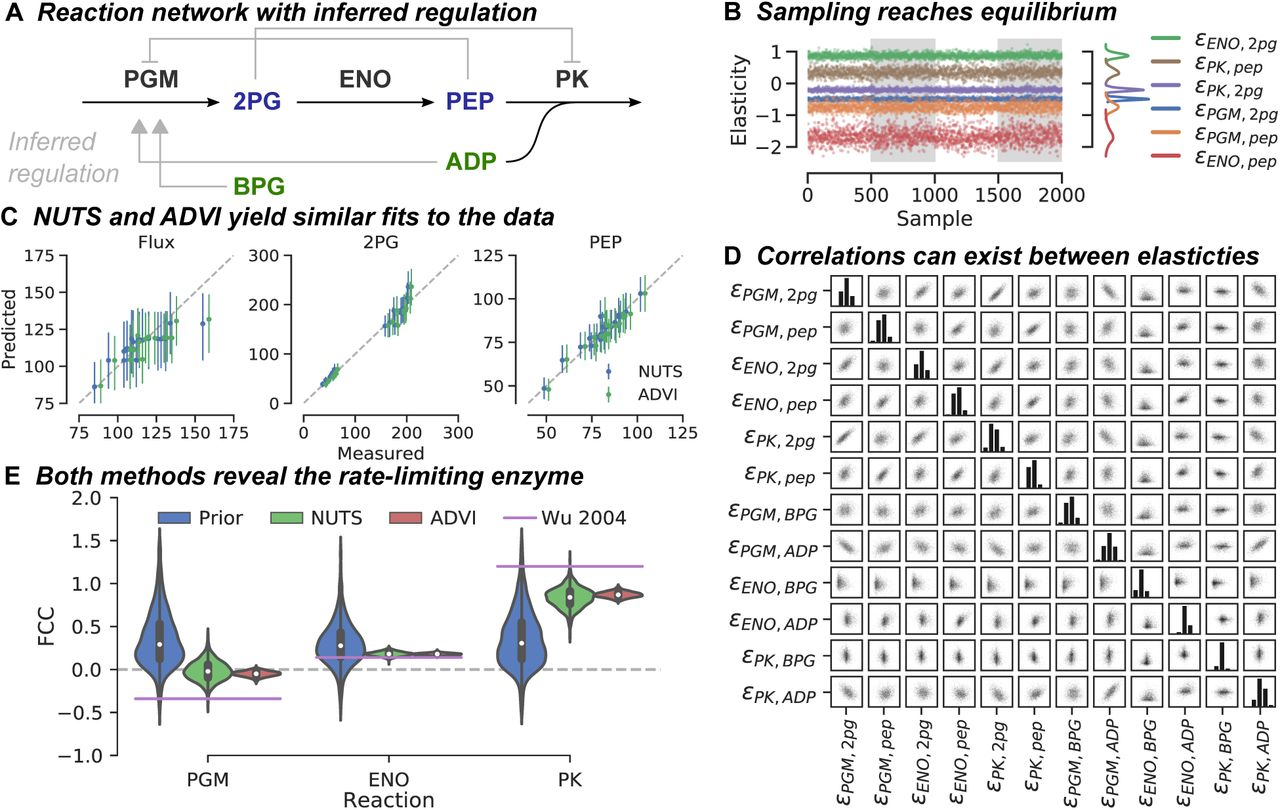 Bayesian inference of metabolic kinetics from genome-scale